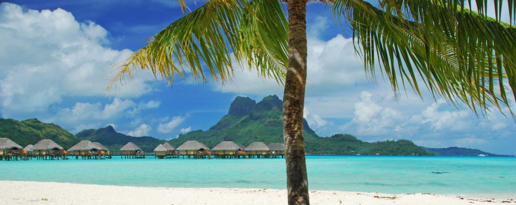 En palm står i förgrunden av en tropisk strand