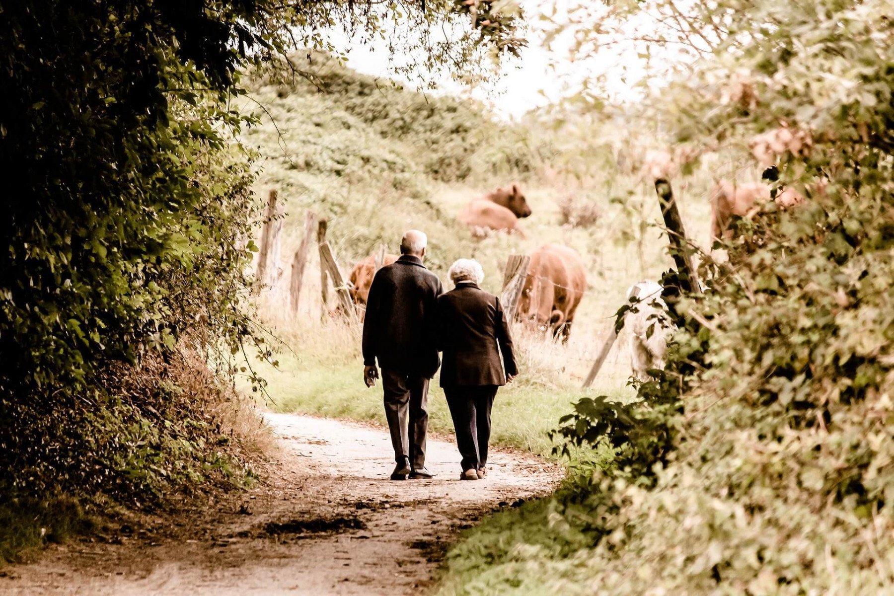 Äldre par man och kvinna går arm i arm på en skogsväg förbi en hage med kor
