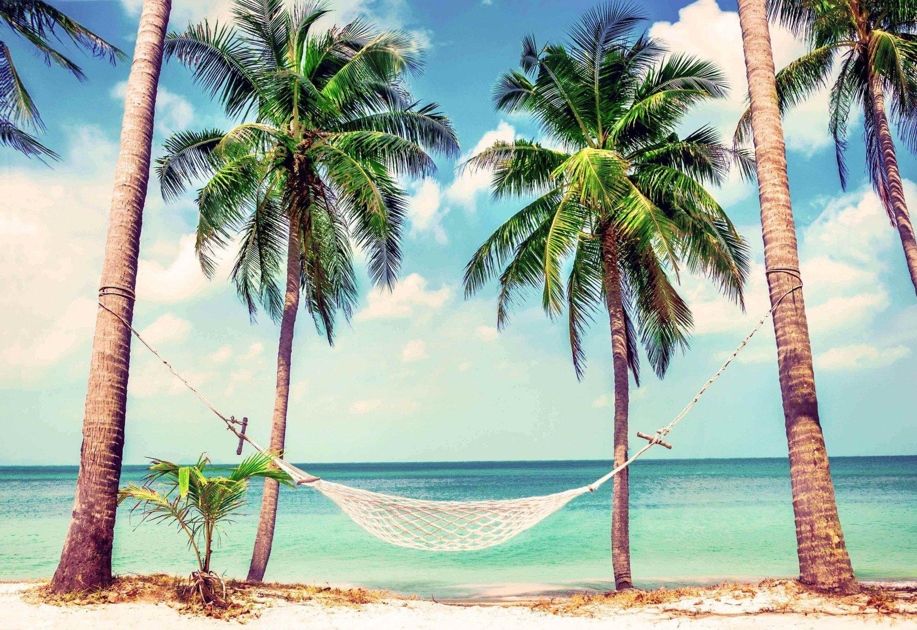 Semesterbild med palmer och hängmatta